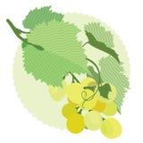 Druivenwit, druivenbladeren, wijnstokken Stock Fotografie