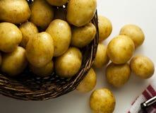 Drukke Oogst van Nieuwe Aardappels stock fotografie