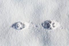 Drukken van de poten van dieren op sneeuwvorst royalty-vrije stock fotografie