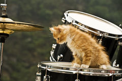 Drummer Royalty Free Stock Photography