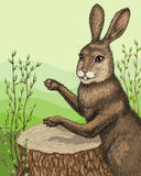 Drumming hare Stock Photo