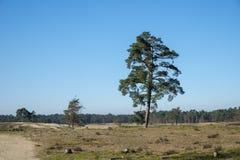 Drunense för en för naturområdesloonse duinen i holland Arkivfoto