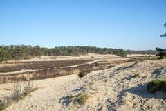 Drunense för en för naturområdesloonse duinen i holland Royaltyfria Bilder