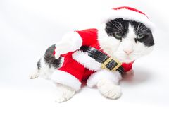 Drunk Santa Claus Cat. Drunk cat in Christmas dress and Santa Claus hat on studio white background. funny concept royalty free stock images
