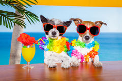 Drunk cocktail dogs Royalty Free Stock Photography