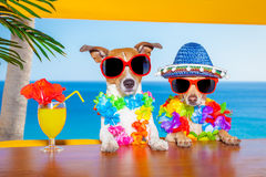 Drunk cocktail dogs royalty free stock photo