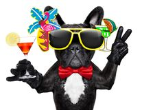Drunk cocktail party dog stock image