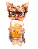 Drunk dog with beer Stock Image