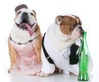 Drunk dog couple Royalty Free Stock Photography