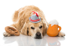 Drunk dog Royalty Free Stock Images