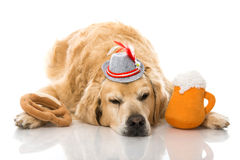 Drunk dog Stock Photo