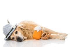 Drunk dog. Isolated on white royalty free stock images