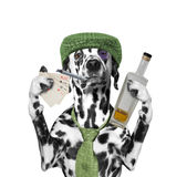 Drunk dog is playing and smoking Royalty Free Stock Images