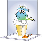 Drunk funny parrot. Funny parrot sitting on a glass of beer Stock Images