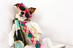 Drunk hangover dog. Drunk jack russell terrier dog resting or sleeping hangover with headache, with bottle and glass , wearing sunglasses and tie Royalty Free Stock Photos