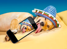 Drunk mexican dog Royalty Free Stock Photography