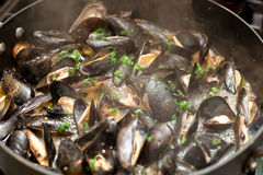 Drunk mussels Royalty Free Stock Photos