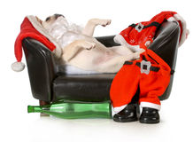 Drunk santa. French bulldog santa laying on couch with wine bottle at feet isolated on white background Stock Photography