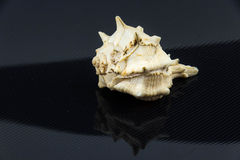 Drupa rubusidaeus på svart bakgrund Royaltyfri Fotografi
