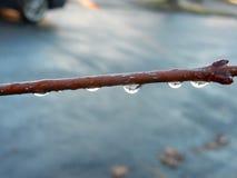 Druppels van water op een tak stock afbeelding