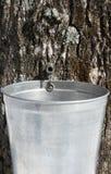 Druppeltje dat van sap in een emmer stroomt om ahornstroop te produceren Stock Fotografie
