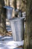 Druppeltje dat van sap van de esdoornboom stroomt Stock Foto