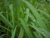 Druppeltje op bladeren groene kleur Royalty-vrije Stock Afbeelding
