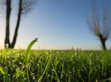 Druppeltje op een grassprietje stock afbeeldingen