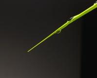 Druppeltjes op blad groene installaties stock foto's