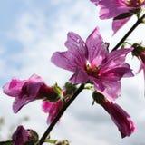 Druppeltjes op bloemen Royalty-vrije Stock Fotografie