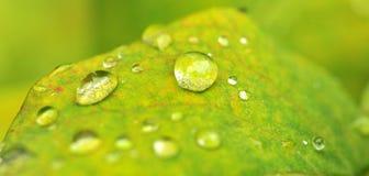 Druppeltjes op groen Royalty-vrije Stock Afbeeldingen