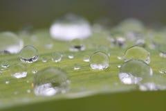 Druppeltjes op groen blad Stock Afbeeldingen