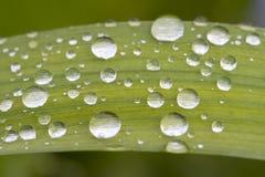Druppeltjes op groen blad Stock Foto's