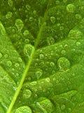 druppeltjes op groen blad Royalty-vrije Stock Afbeeldingen