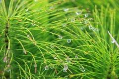 Druppeltjes op groene vegetatie Royalty-vrije Stock Foto's