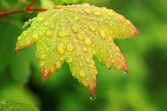 Druppeltjes op groene vegetatie Royalty-vrije Stock Fotografie
