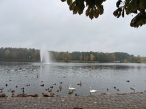 Druskonis lake and birds, Lithuania Stock Images
