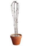drut kaktus udaremniający denerwujący drut Obrazy Stock