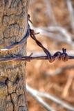 drut kolczasty Zdjęcia Stock