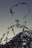 Drut kolczasty Obraz Royalty Free