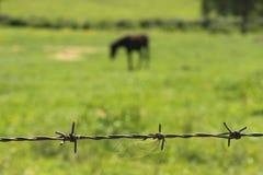 Drut kolczasty i koń Fotografia Stock
