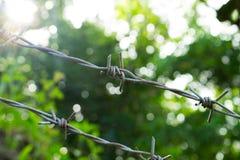 Drut kolczasty na pogodnym greenery tle Drut kolczasty pod światłem słonecznym Zdjęcie Royalty Free