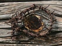 DRUT KOLCZASTY NA STARYM drzewie Obrazy Stock