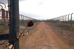 Drut kolczasty wokoło koncentracyjnego obozu Boczny wejście koncentracyjny obóz Zaakcentowany różany i drut kolczasty Zdjęcia Royalty Free