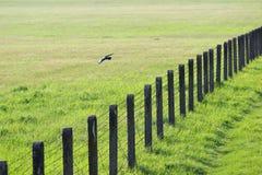 Drutu kolczastego ogrodzenie na zielonej trawie Obraz Royalty Free