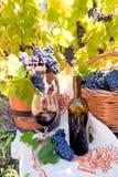 Druva- och vinsammansättning i vingård Royaltyfria Bilder