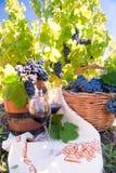 Druva- och vinsammansättning i vingård Arkivbilder