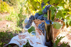 Druva- och vinsammansättning i vingård Fotografering för Bildbyråer