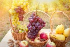 Druva - röda druvor och vita druvor på tabellen i vingård fotografering för bildbyråer
