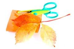 druva som imiterar den wild leafen Royaltyfria Foton